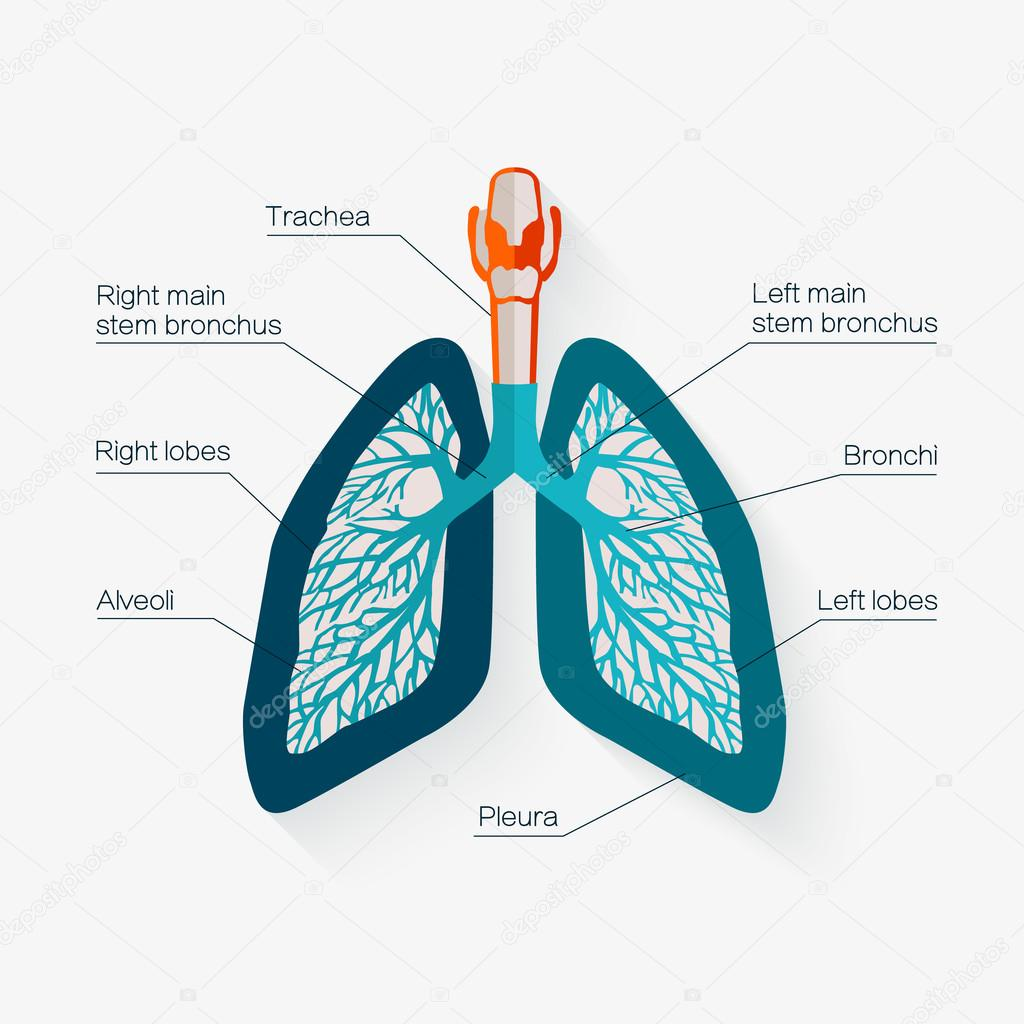 Flat Design Icon Of Human Lungs Vector Illustration Stock Vector