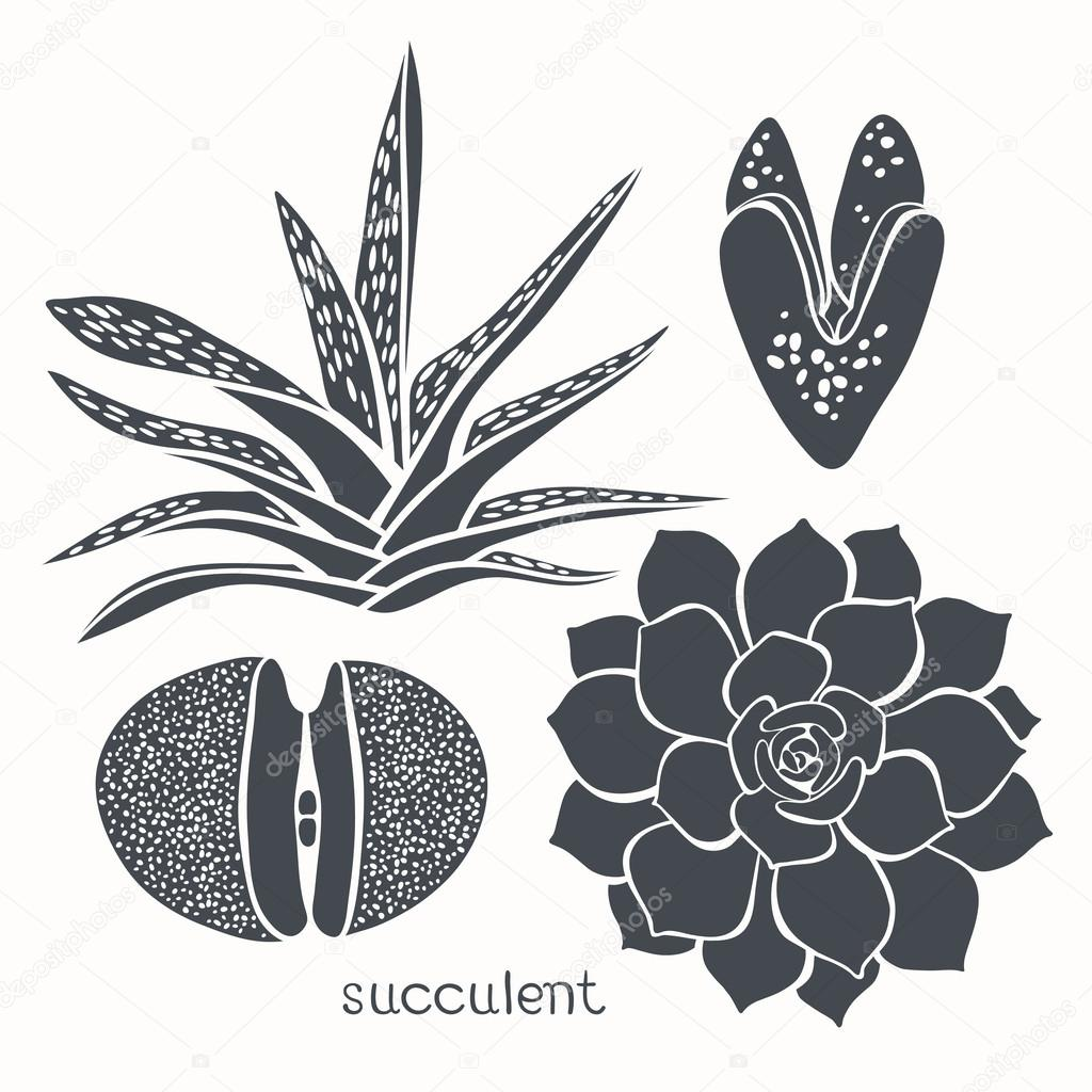 Graphic set with succulents