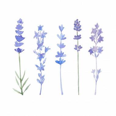 Watercolor lavender set.