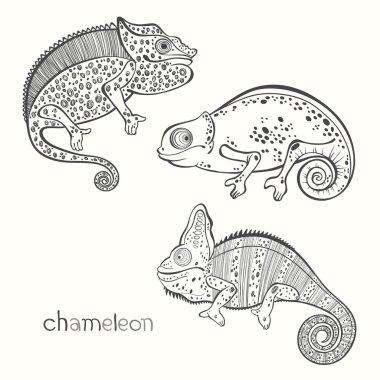 Set of chameleons