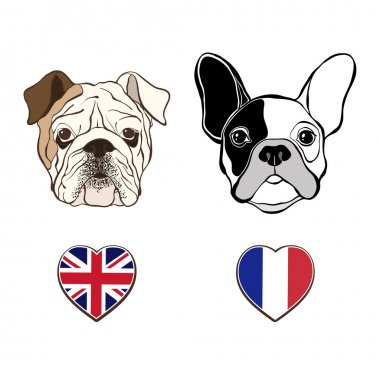 English and French bulldogs