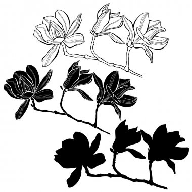 Set of magnolia branches