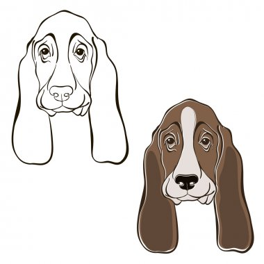set of  basset hound's face