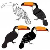 Photo Set of Toucan birds