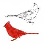 Cardinal birds set