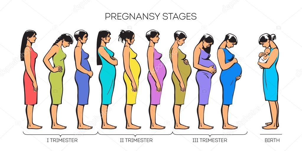 413445890 Etapas del embarazo de las mujeres — Archivo Imágenes Vectoriales ...