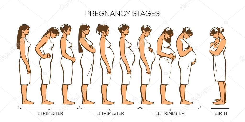 gravid jag i skeden