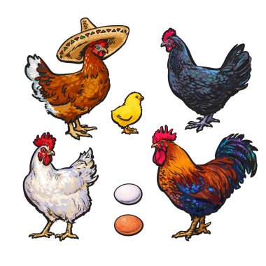 Set of different chickens