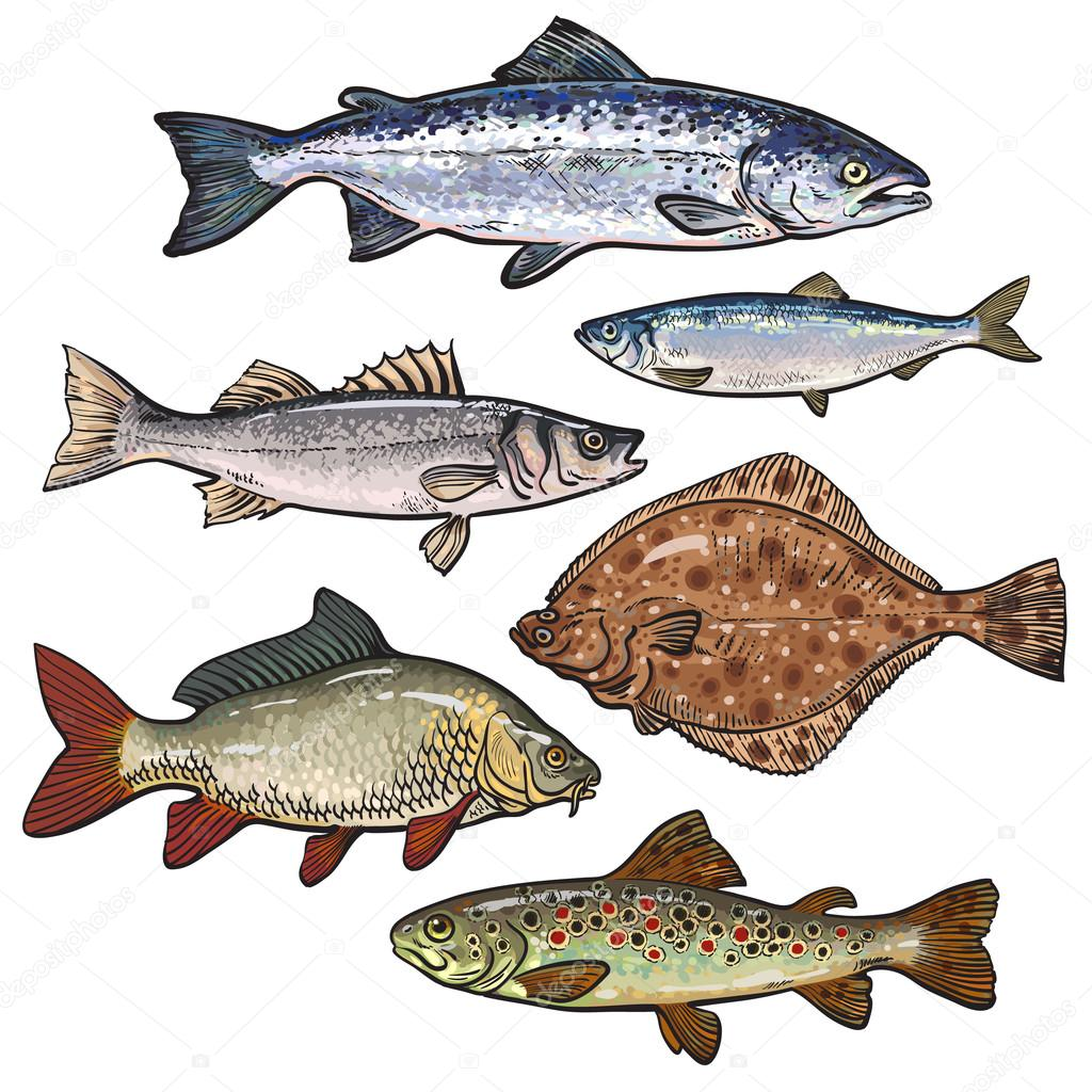 Colorful Sea Fish Sketch Style Collection Isolated On White