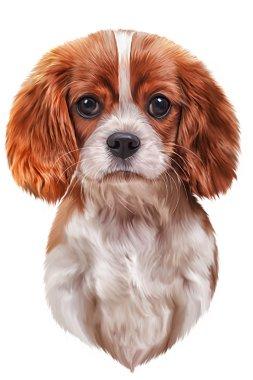Drawing dog Cavalier King Charles Spaniel
