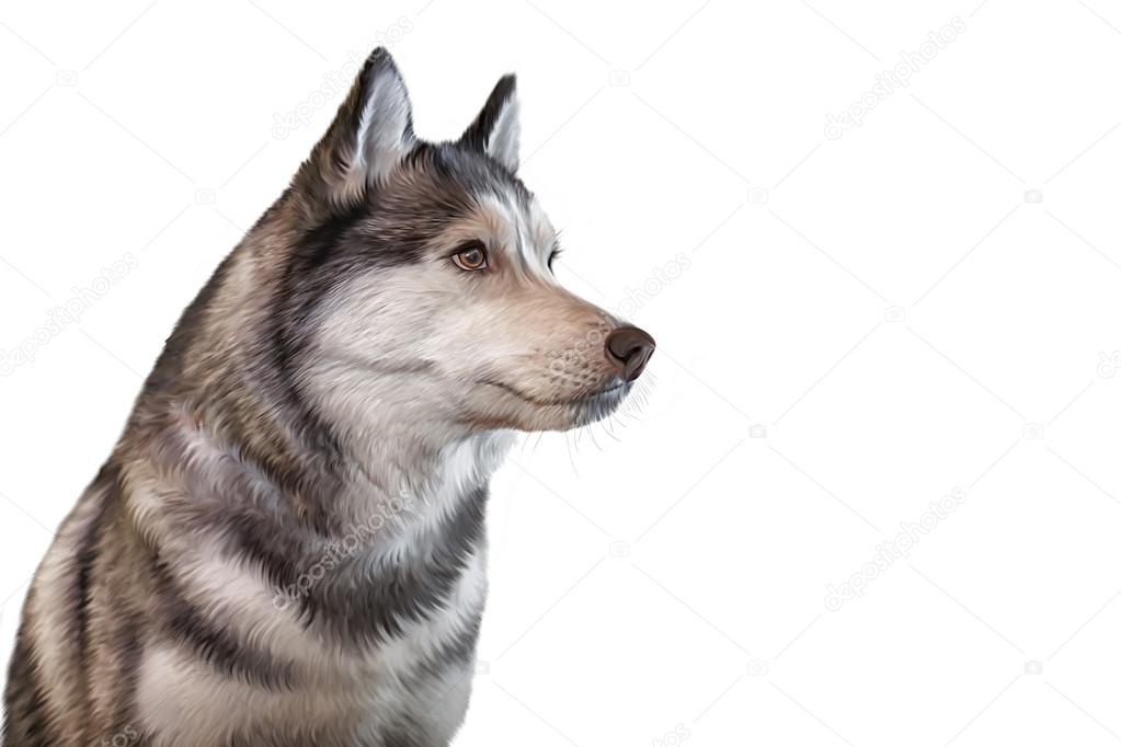 Imágenes: husky siberiano dibujo | Perro Husky siberiano de dibujo ...