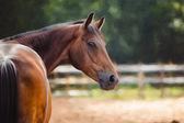 Fotografia disegno di un cavallo, ritratto