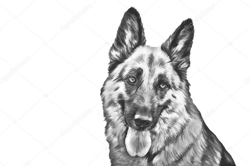 Drawing Of The Dog German Shepherd Dog Stock Photo C Averyanova - German-shepherd-drawings