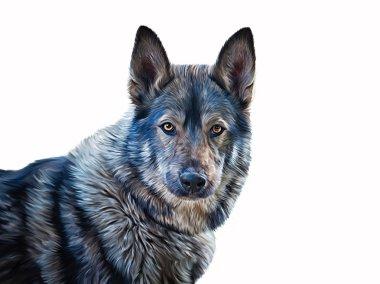 Drawing  mixed breed Dog Wolf