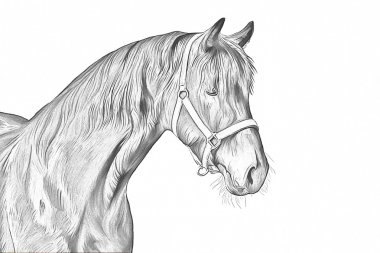 Drawing of a horse, portrait, on a white background, Hand-drawn