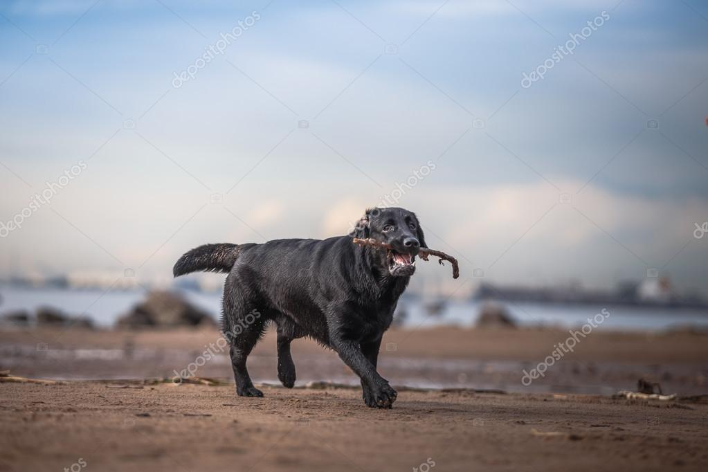 Dog playing in water