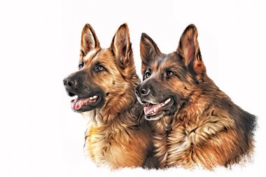 Drawing dog German Shepherd