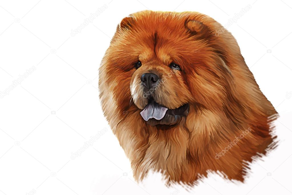 Drawing Of The Dog Chow Chow Red Portrait Stock Photo