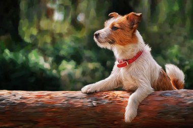 Drawing Dog Jack Russell Terrier walks on nature