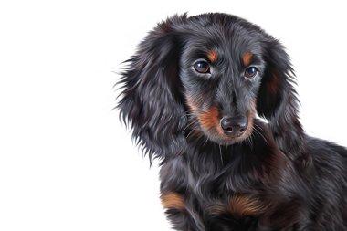 Drawing Dog breed dachshund