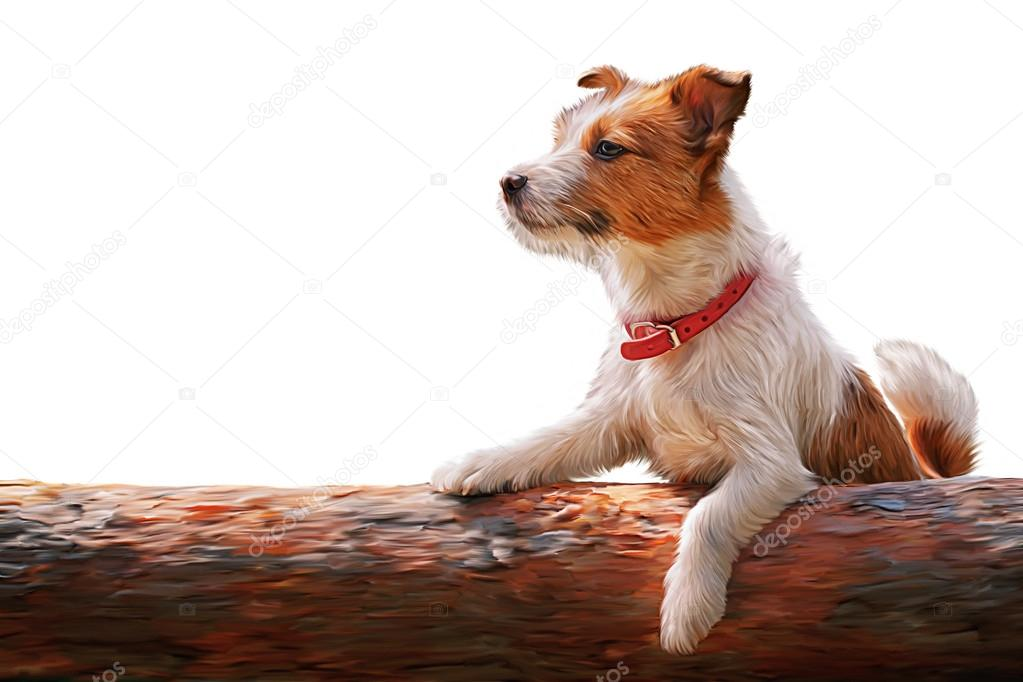 Walks For A Jack Russell Dog