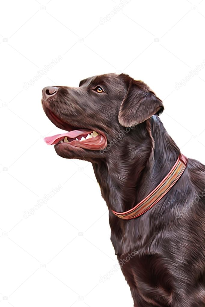 Drawing Dog Labrador Portrait Stock Photo C Averyanova 88227030