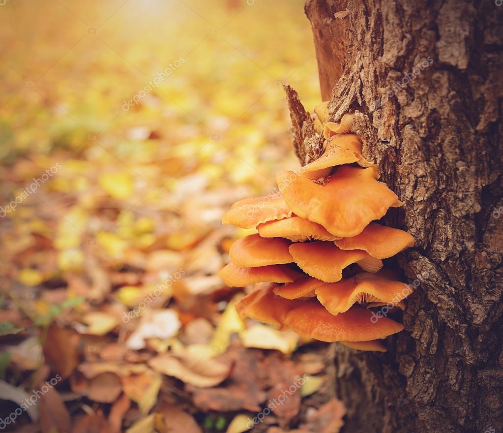 Orange mushrooms on tree trunk