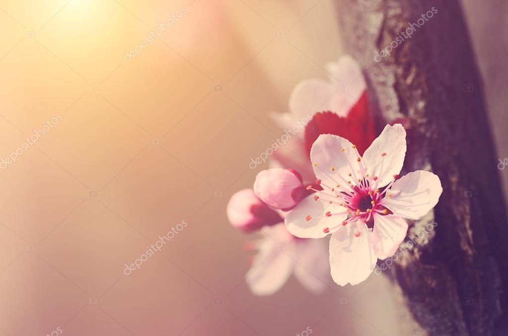 Dreamy photo of spring flowers