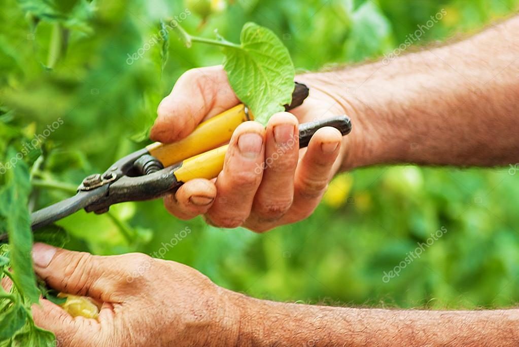 gardener working at garden