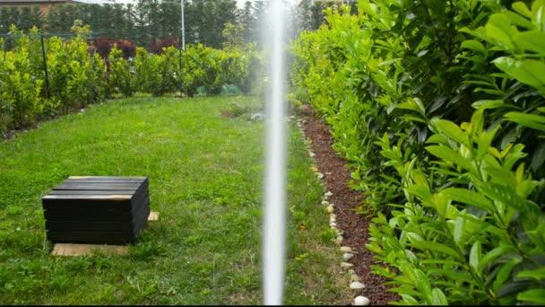 Zalévání svěží zelené domácí zahrady od postřikování. Subjektivní pohled, jarní