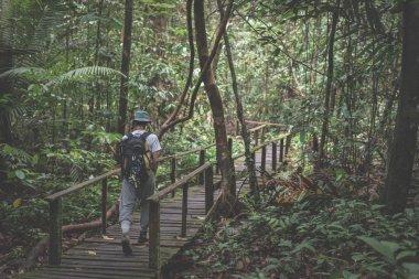Backpacker exploring the majestic jungle of Kubah National Park, West Sarawak, Borneo, Malaysia.