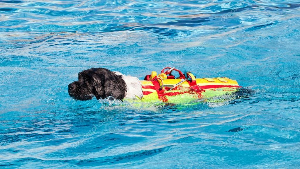 Schwimmbad Mit Hund