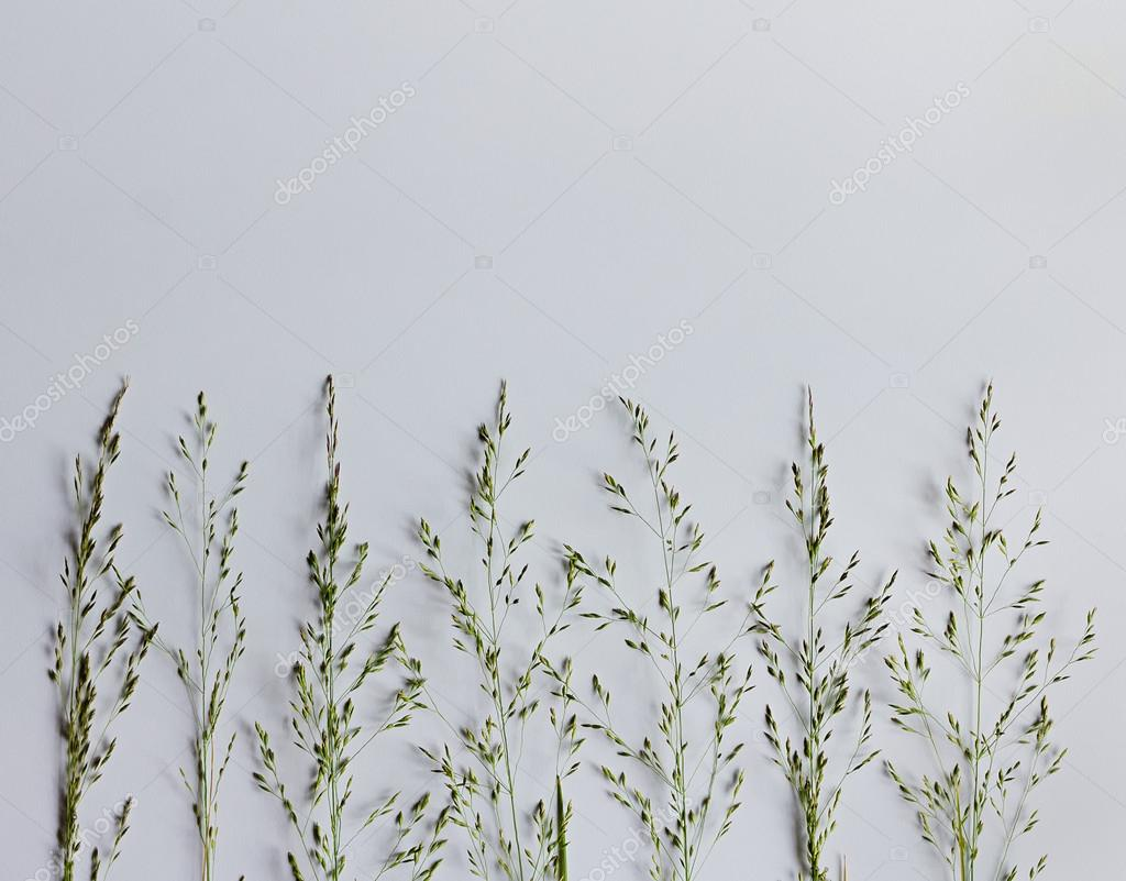Wild grass on a white background. Minimal flat design.