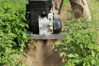 Plowing potato mini tractors plow.