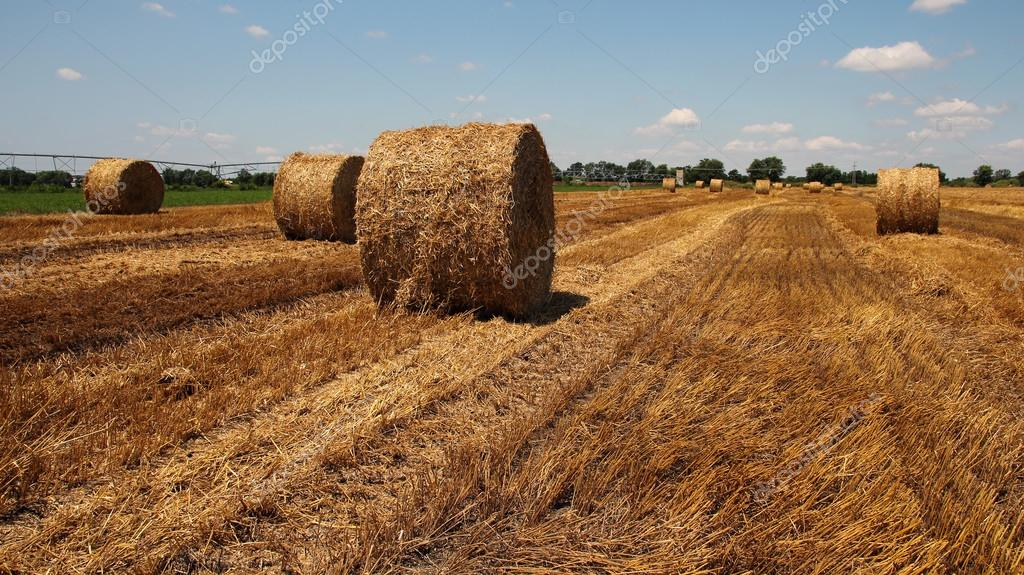 Straw Bales on a Stubble Field