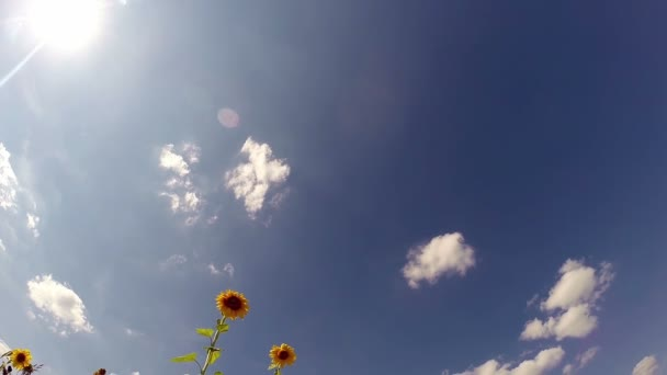 Summer Heat in the Field