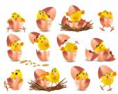 Sammlung von niedlichen gelben Hühnern. Lustige Cartoon-Hühner für Ihr Design. Osterküken auf weißem Hintergrund. Hühner schlüpfen aus einem Ei. Vektorillustration