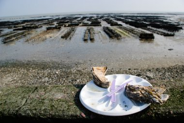 Oyster plate from the oyster farms in Cancale