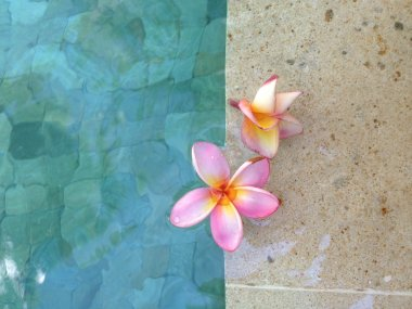 Exotic flowers in a Balinese spa