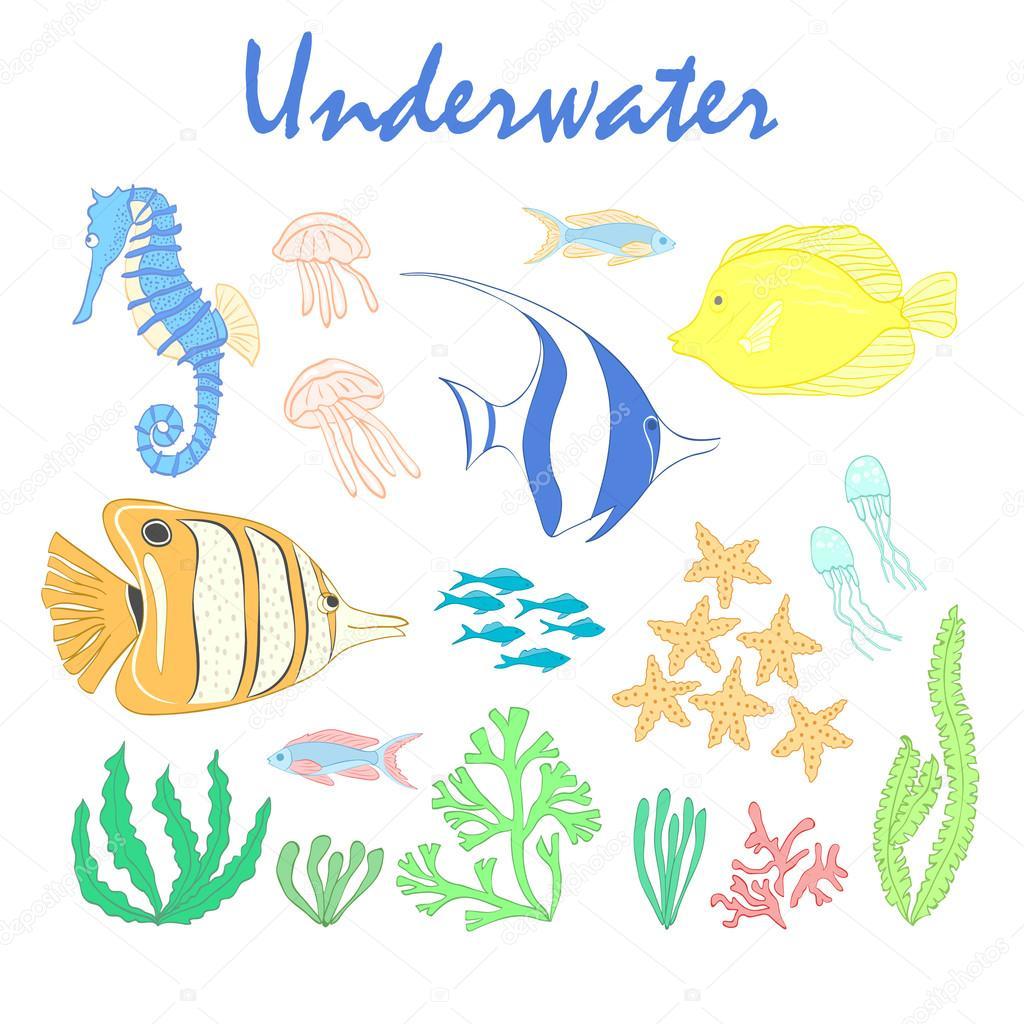 Insieme Di Elementi Di Design Sott Acqua Pesce Di Mare Elementi Di