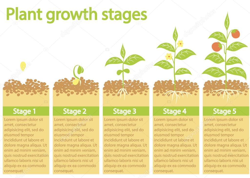 an introduction to the process of germination the development and the reason for the growth of plant Dna is the instruction manual for the successful growth of a development over time in this plant effects of irradiation on seed germination.