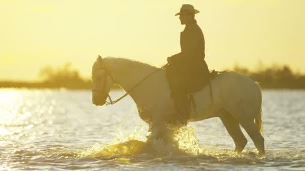 kovboj na koni na bílém Camargský kůň