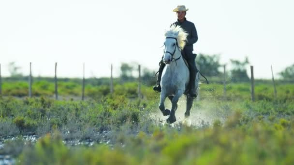 cowboy riding on white Camargue horse