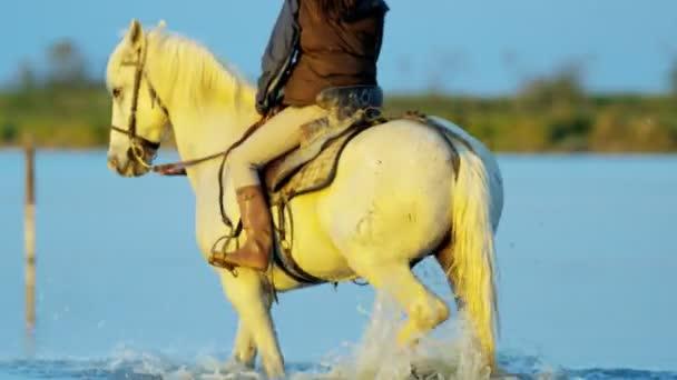 ženské kovboj na koni na Camargský kůň