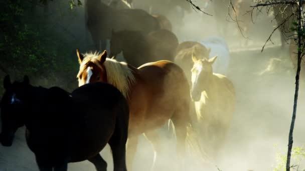 A razzia vágtató lovak