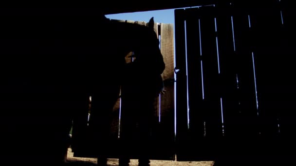 Kovboj v stodole s koněm