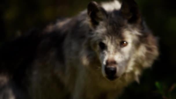 Rozhovor: Wolf lov pro potraviny