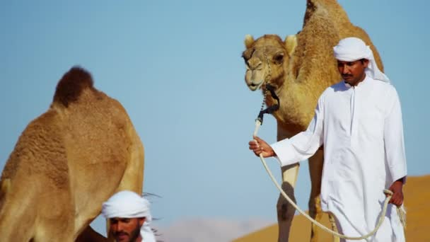 camels on Safari in desert sand dunes