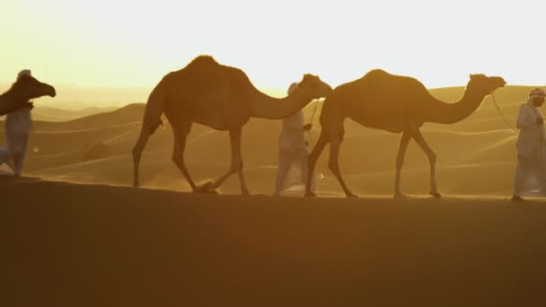 convoy of camels travelling across desert