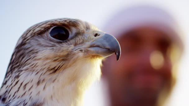 Arab wearing dishdasha with trained falcon